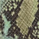 053 Soft Green Rattler