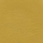 101 Mustard Yellow