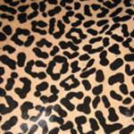 217 Cheetah